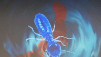 blue-termite-apt-targets-jp-only-1